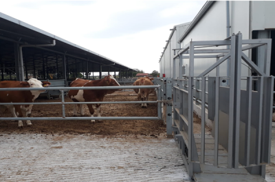 Livestock Weigh Crates with Wireless EID and Powerful Data Collection