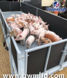 AWM products support trials in the UK's Largest Pig Farming Business